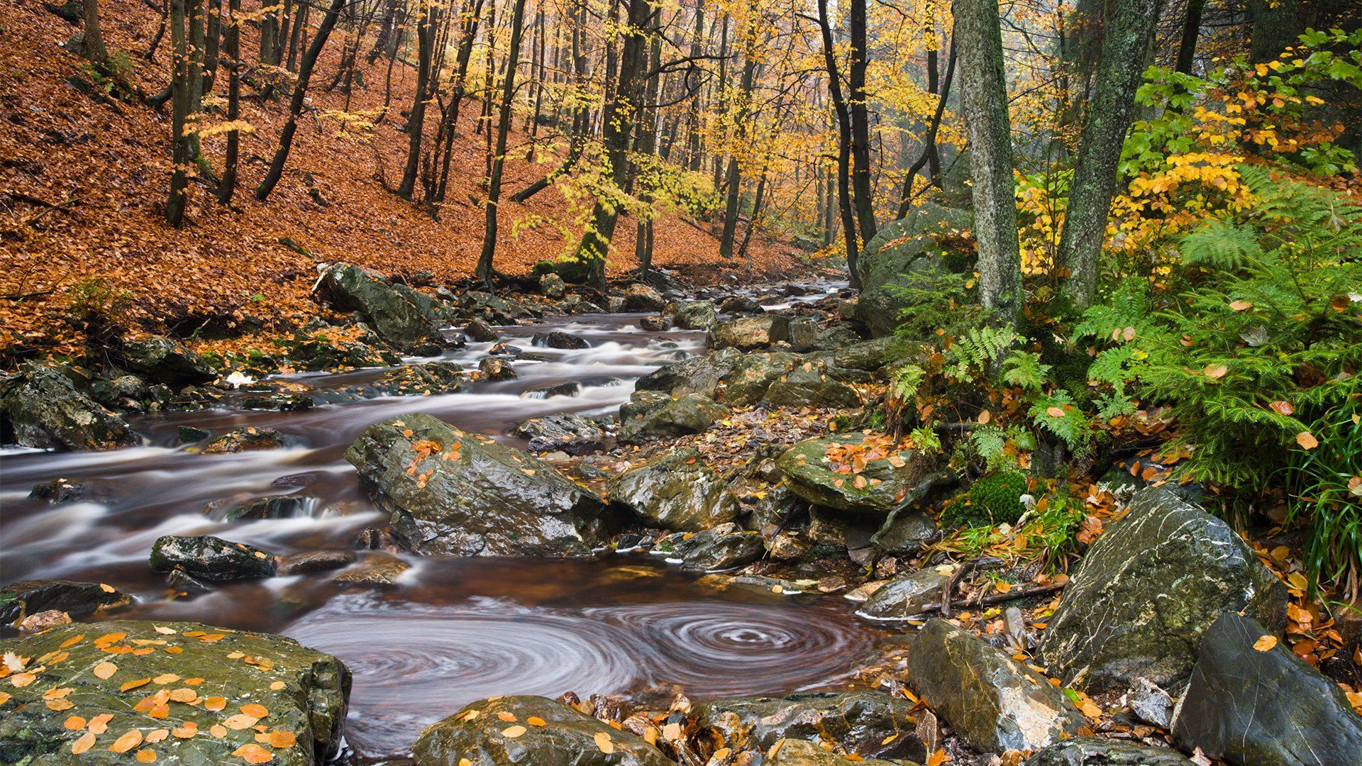 A mountain stream flows through an autumnal landscape, with ferns and rocks in the foreground.